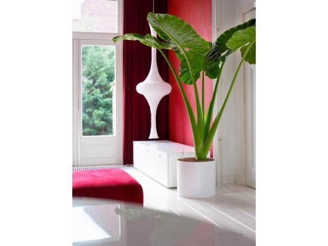 Best Plant Hire in Melbourne | Inscape Indoor Plant Hire - 1