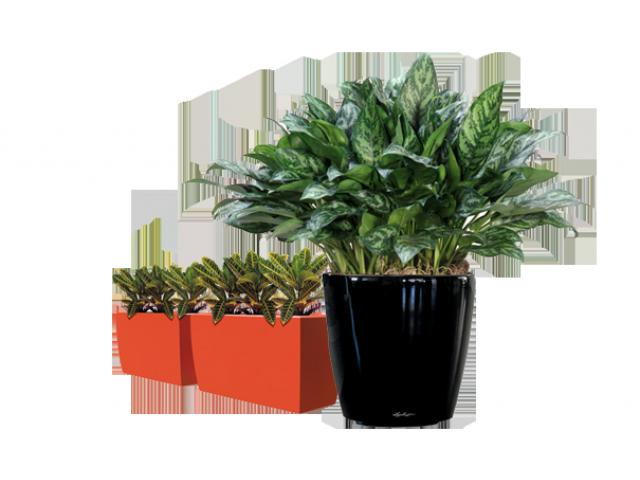 Best Plant Hire in Melbourne | Inscape Indoor Plant Hire - 3