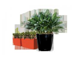 Best Plant Hire in Melbourne | Inscape Indoor Plant Hire - Image 3