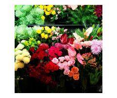 Florist In Perth WA - Image 2
