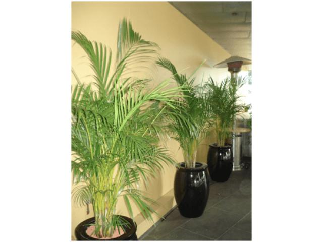 Corporate Plant Hire | Luwasa Indoor Plant Hire - 1