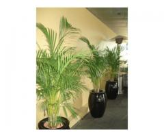 Corporate Plant Hire | Luwasa Indoor Plant Hire - Image 1