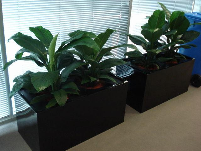 Corporate Plant Hire | Luwasa Indoor Plant Hire - 2