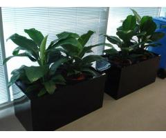 Corporate Plant Hire | Luwasa Indoor Plant Hire - Image 2