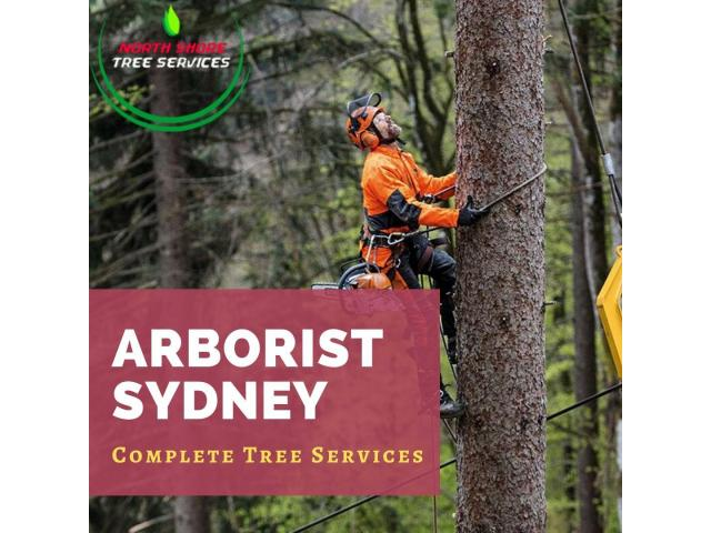 Complete Tree Services Under One Roof - 1