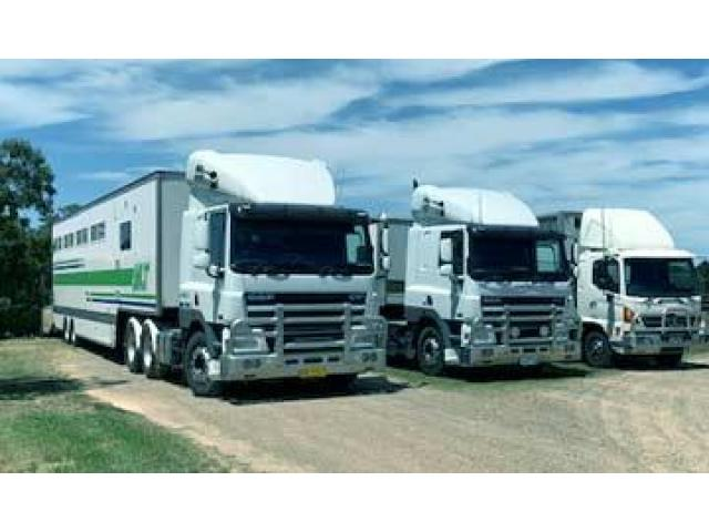 Horse Transportation Services in Australia|mltequinetransport - 3