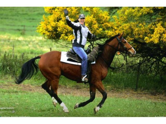 Horse Transportation Services in Australia|mltequinetransport - 4