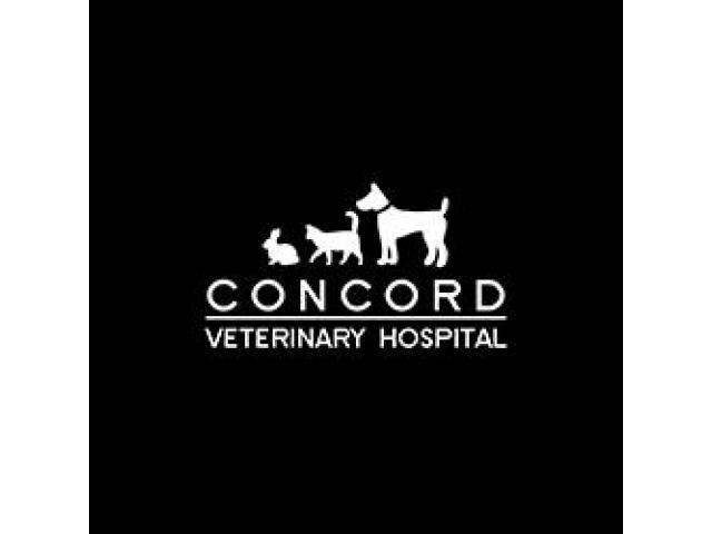 Animal Hospital in Concord, North Strathfield - 1