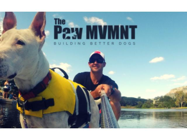 Dog Obedience Training for Puppies and Matured- The Paw MVMNT - 1