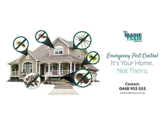 Pest Control Services in Balwyn by Team of Experts - 1