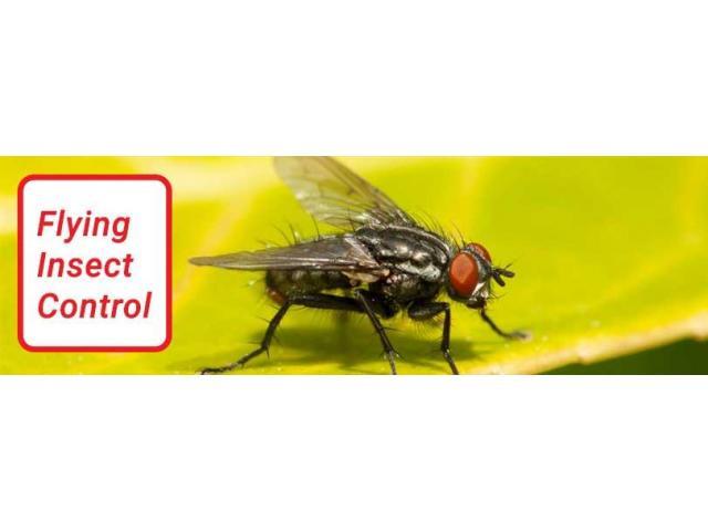 Pest Control Hamilton - 1