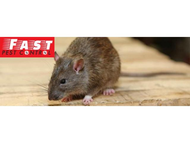 Pest Control Hamilton - 3