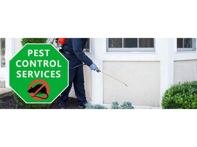 Pest Control Hamilton - 4