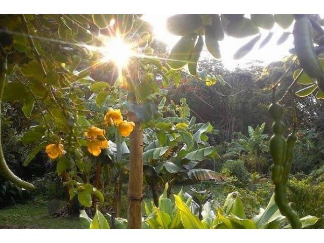 Syntropic Gardening In Queensland - 1