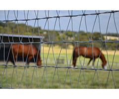 Choose High Quality Horse Fence