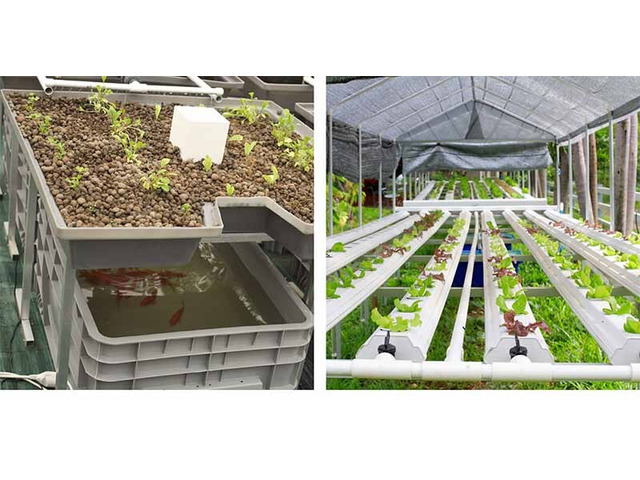 What are Hydroponics and Aquaponics and Their Environmental Benefits - 1