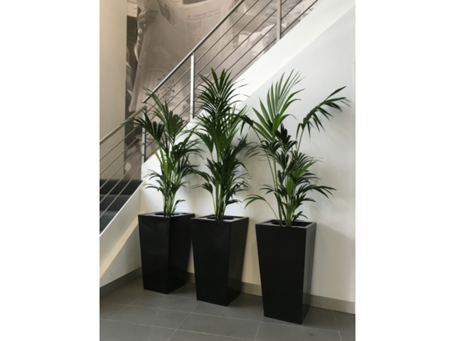 Quality Office Plants Melbourne | Inscape Indoor Plant Hire - 1