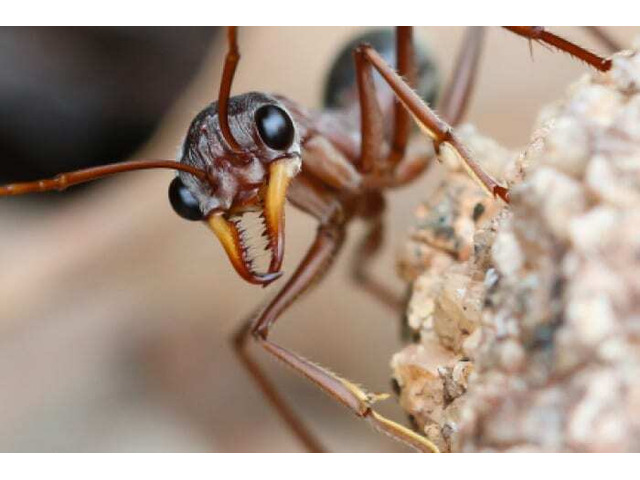 Pest Removal Services At Pests Control Shepparton, VIC - 3