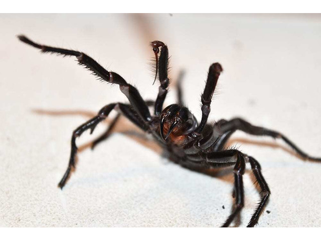 Pest Removal Services At Pests Control Shepparton, VIC - 6